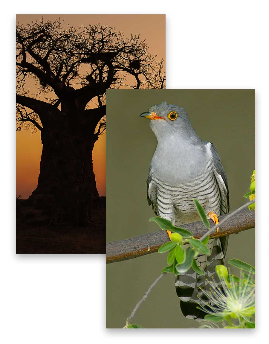 ecotour-collage